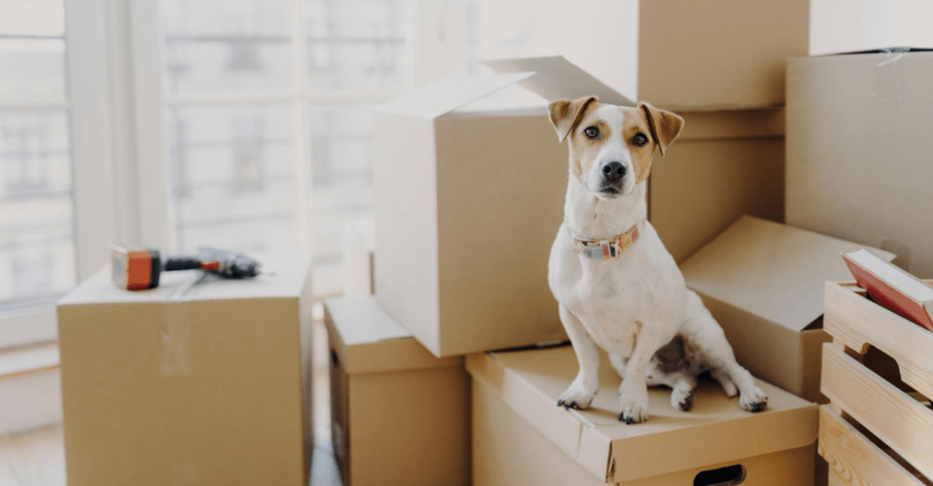 How to prepare for a move in San Diego