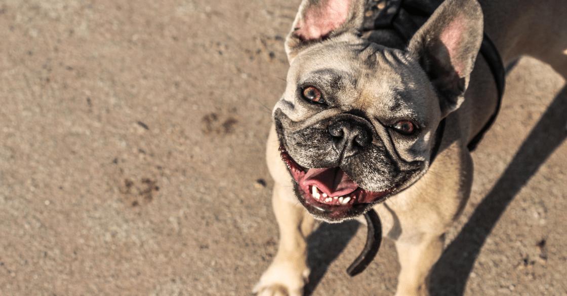 Dog enjoying the beach in San Diego