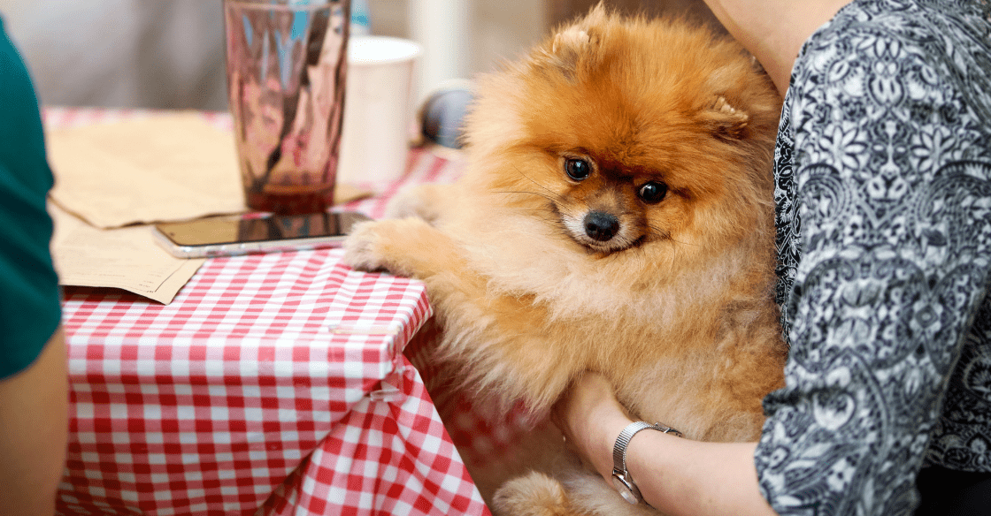 Woman holding a dog at a restaurant